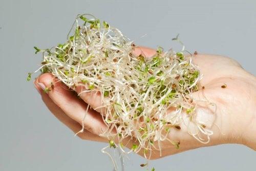 Keime und Sprossen - schädliche Lebensmittel