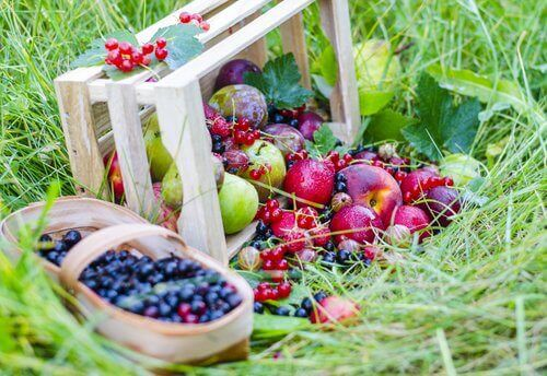 Lebensmittelo, die Kollagen spenden: Beeren