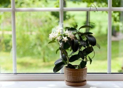 Blätter von Zimmerpflanzen reinigen