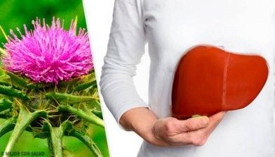 Mariendistel, eine Pflanze mit unglaublichen Vorteilen