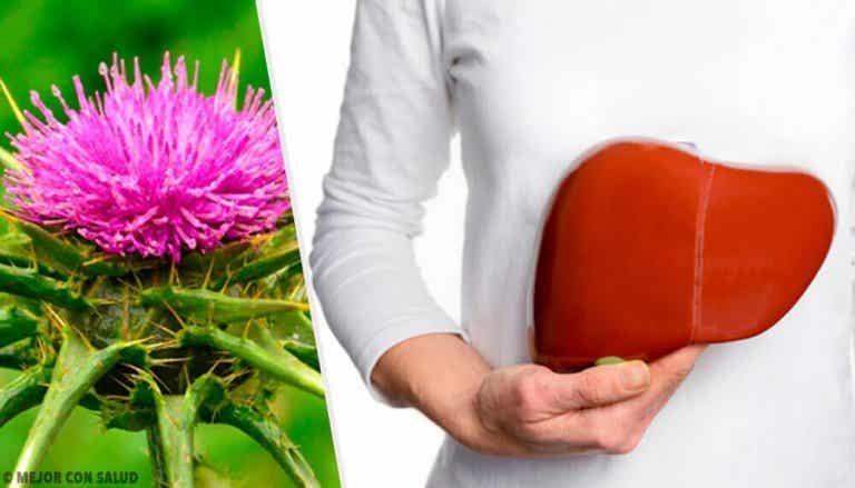 Mariendistel: Eine Pflanze mit unglaublichen Vorteilen