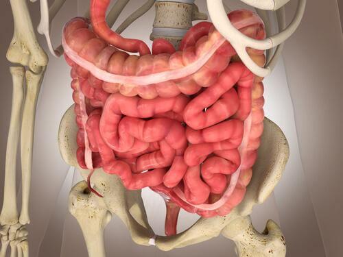 Stuhlgang - Physiologie des Dickdarms