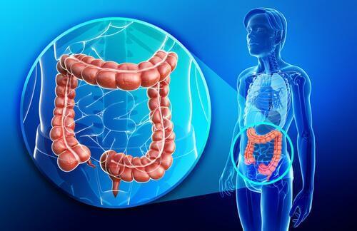 Stuhlreflex - Physiologie des Dickdarms