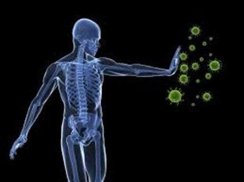 Alfalfa stärkt das Immunsystem