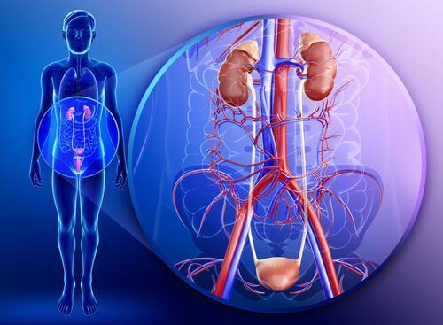 Petersilie für deine Gesundheit: gut für die Nieren
