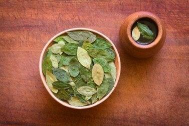 Tee aus Coca-Blättern ist gesund