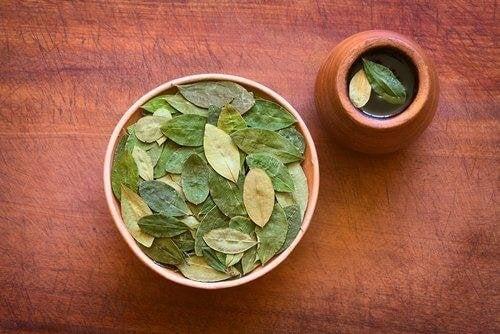 Warum Tee aus Coca-Blättern gut für die Gesundheit ist