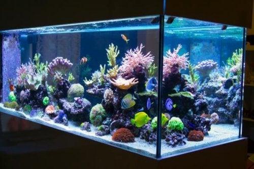 Weitere Tipps für die Aquarium-Reinigung
