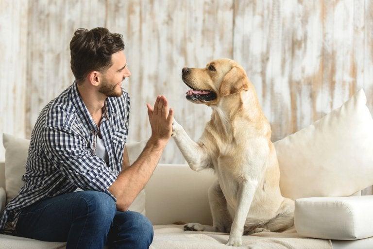 Welche Vorteile ein Haustier hat