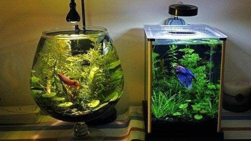 Wie du ein Aquarium richtig reinigst