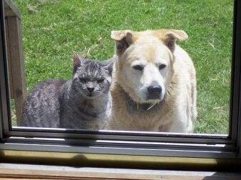 ein Haustier für die Familie - Hund oder Katze?