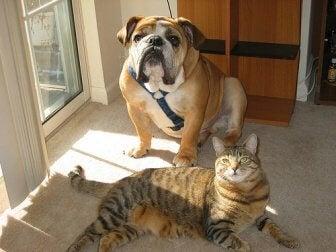 ein Haustier wie Katze oder Hund