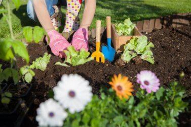 7 Möglichkeiten, Essig im Garten zu verwenden