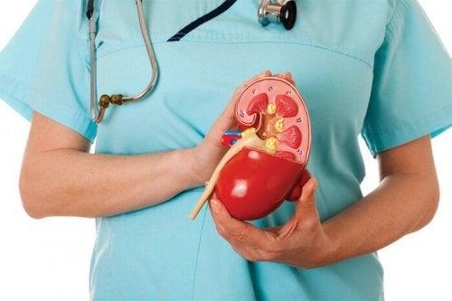 Heilmittel zur Reinigung der Nieren