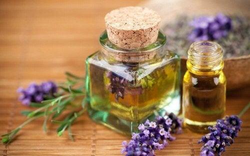 Lavendel für Aromatherapie
