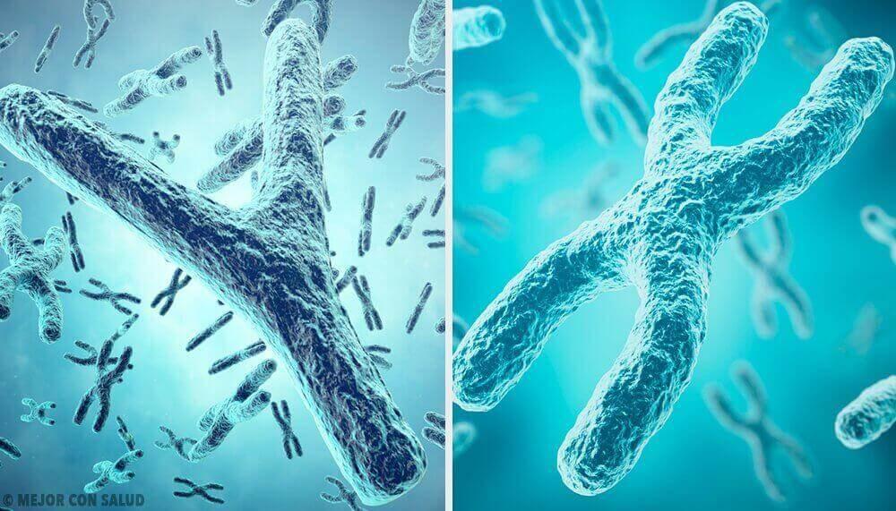 Der genetische Ursprung des Geschlechts
