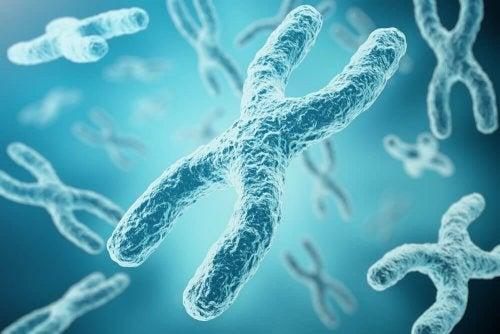 Der genetische Ursprung des Geschlechts Inaktivierung des Chromosoms