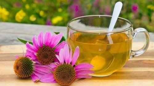 Behandlungen gegen Zystitis: Echinacea