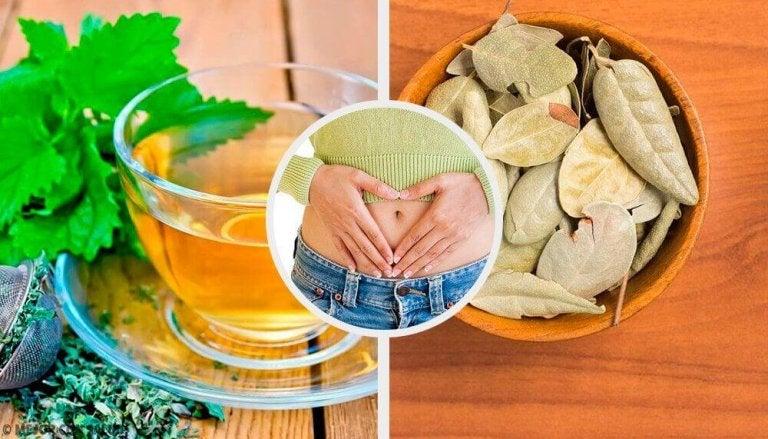5 Kräuter gegen Verdauungsbeschwerden