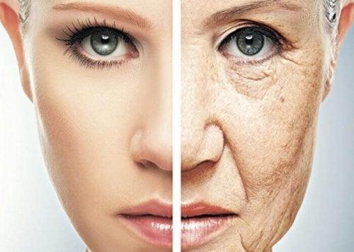 Spargel gegen Hautalterung
