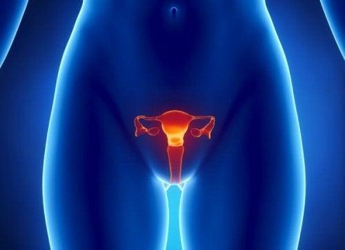 Menstruationszyklus bei einer Frau mit 45 natürlich schwanger