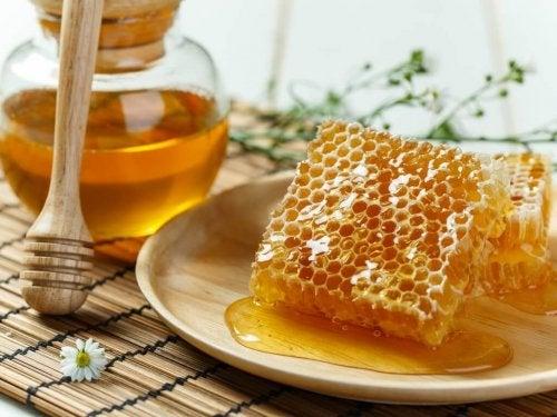 Propolis wird durch Bienen gewonnen.
