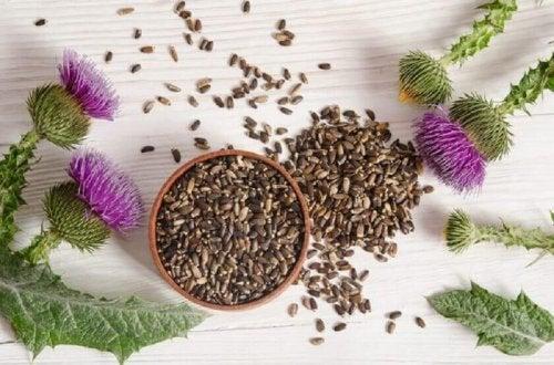 Tees gegen Verdauungsstörungen enthalten Mariendistel