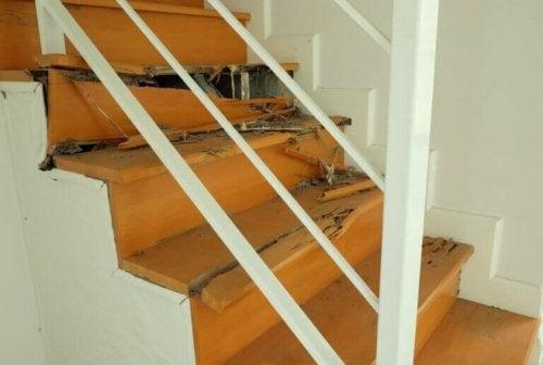Wie man Termiten im Haus bekämpft