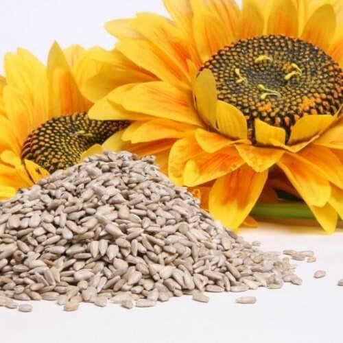 Trockenfrüchte und Nüsse enthalten Vitamine