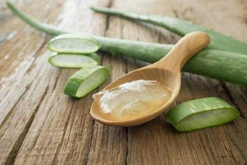 Aloe vera gegen trockene Haut