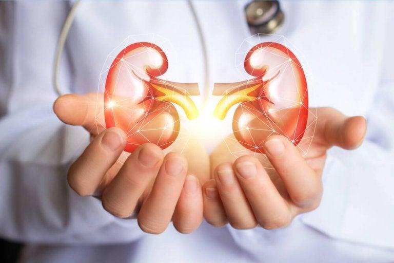 Mit dieser Diät kannst du deine Nieren reinigen
