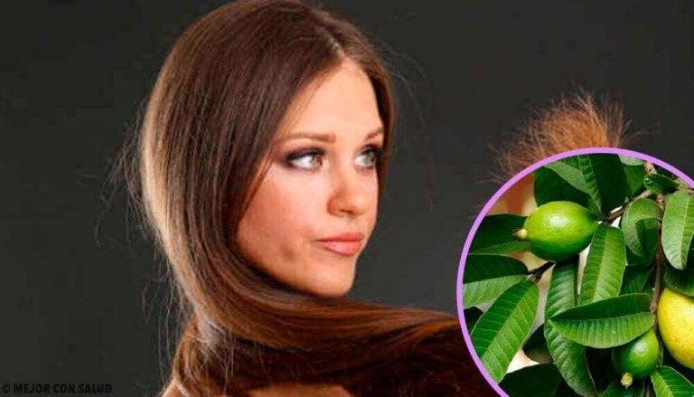 Guavenblätter für geschädigte Haare