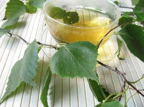 Nierensteine loswerden mit Birkenblättertee