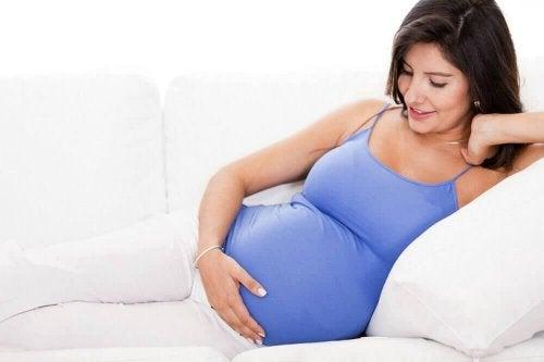 Tilapia-Fisch während der Schwangerschaft.