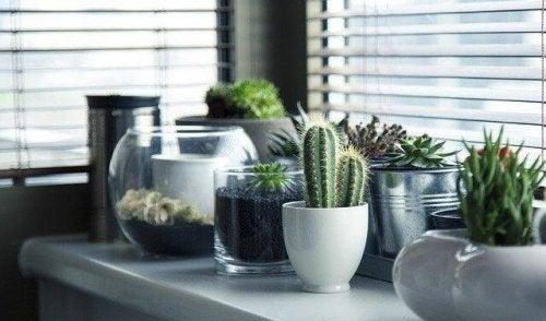 5 schöne Deko-Ideen für deinen Kaktus