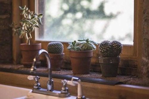 hängende Körbe für Kaktus