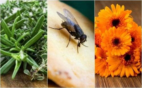 6 natürliche Mittel gegen Fliegen im Haus