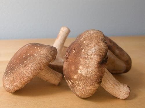 Pilze mildern Begleiterscheinungen von Eierstockkrebs