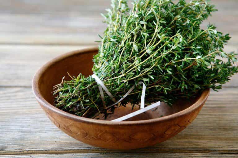 Heilpflanze Thymian