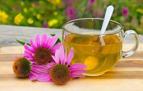 Echinacea Tee steigert die Abwehrkräfte
