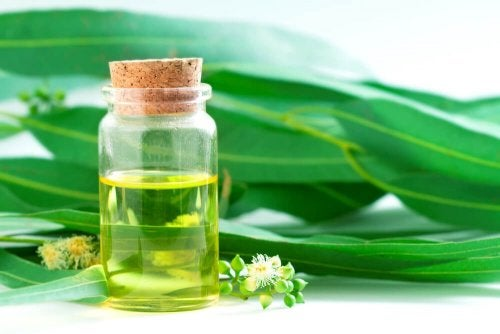 ätherisches Eukalyptusöl