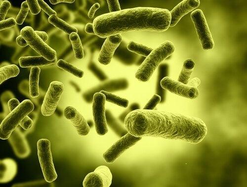 Toxine können Ursachen einer Magen-Darm-Entzündung sein