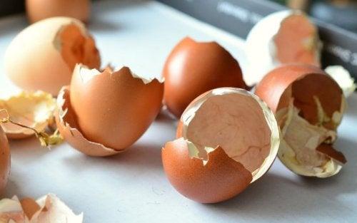Naturdünger mit Eierschalen