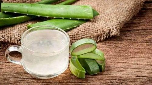 Aloe vera zur Behandlung von Gerstenkörnern