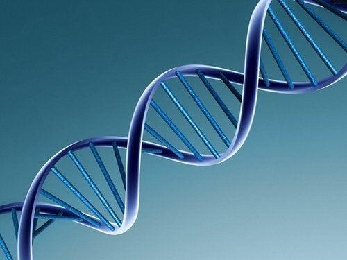 Unterschied zwischen eineiigen und zweieiigen Zwillingen: Die DNA