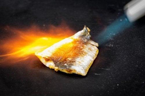 Fisch-Gratin kann man ohne Ofen zubereiten