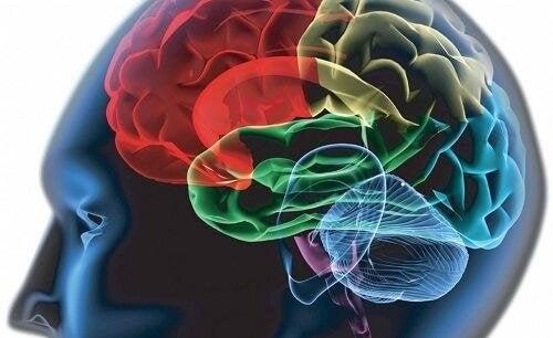Pubertät verändert das Gehirn