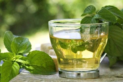 Wie du mit einem Getränk aus Minze und grünem Tee