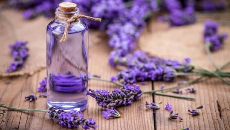 Augenringe mit ätherischen Ölen: Lavendel