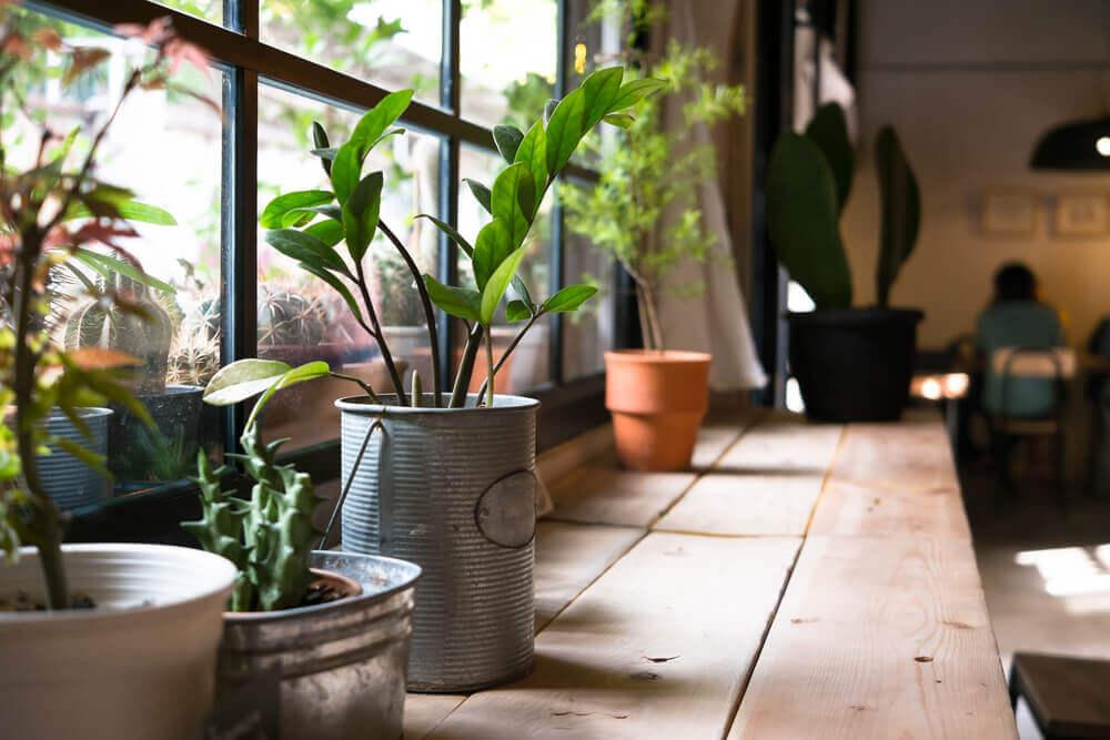 Gesundheitsnutzen von Hauspflanzen